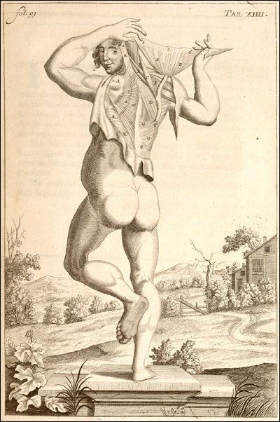 John Brown: Anatómiai illusztráció, National Library of Medicine, 1681.