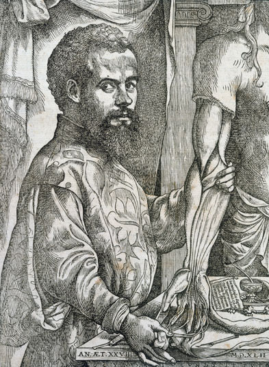 The Flemish anatomist Andreas Vesalius's work De Humani Corporis Fabrica (1543) revolutionized the study of the human body. Vesalius appears almost to hug the corpse: he introduced a radically new attitude towards the body as an object of scrutiny, establishing a close contact with the corpse to be opened and dissected. In order to facilitate his examinations, Vesalius suspended the body vertically.