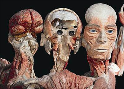 "Heads in the ""Body Worlds"" exhibition - many of the corpses prepared by von Hagens have a special power through the look that stays with them even after plastination. This certainly demands special effort form the plastination team and a targeted purpose from the director."