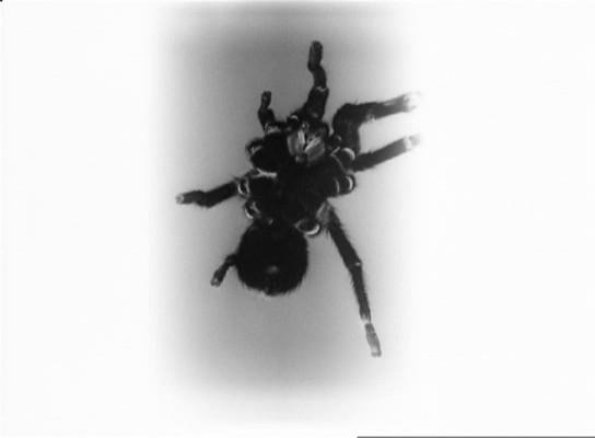 Szürrealista hatású képek a film elejéről, olyan szemiotikus részek, amelyek sem egymáshoz, sem a film elbeszélő részéhez nem kapcsolódnak szervesen.