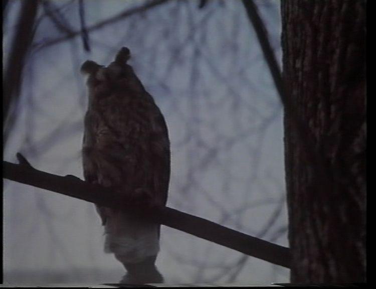 5. kép. Witman fiúk (Szász János, 1997)