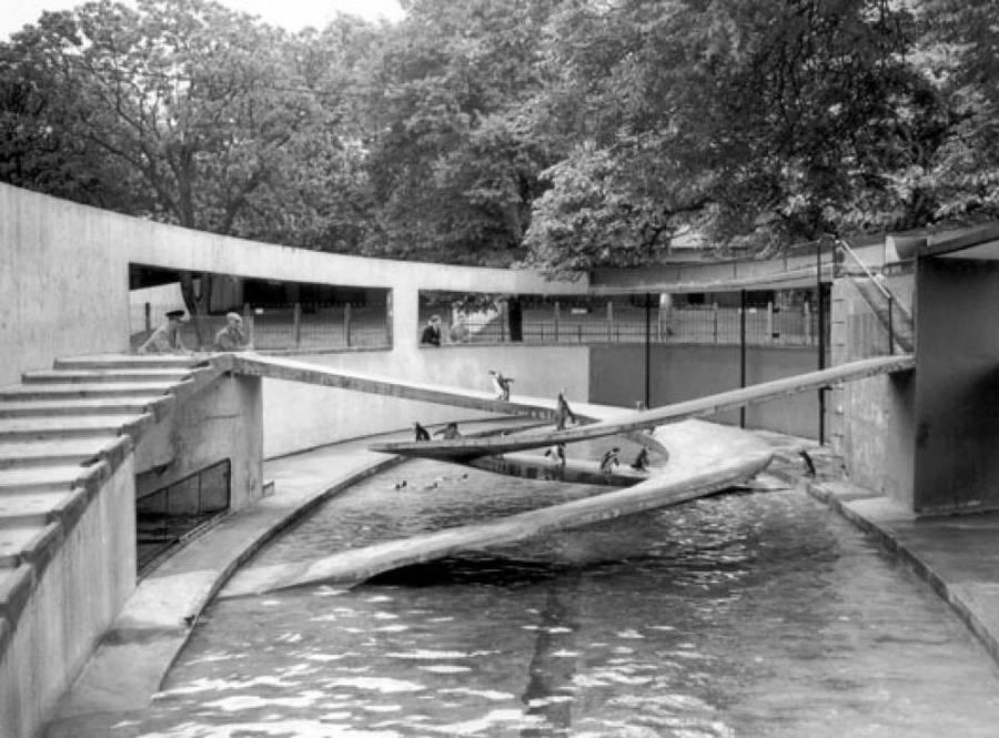 Bertold Lubetkin: <em>Pingvinúsztató</em>, 1943. Londoni Állatkert.
